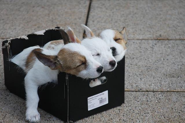 štěňata v krabici